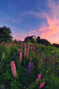 Photograph Summer - time colors by Dmitry Doronin . - Photograph Summer – time colors by Dmitry Doronin … – Aesthetic Backgrounds, Aesthetic Wallpapers, Wallpaper Tumblrs, Images Esthétiques, Nature Aesthetic, Spring Aesthetic, Orange Aesthetic, Aesthetic Bedroom, Nature Wallpaper