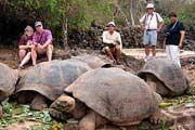 http://www.traveladvisortips.com/galapagos-islands-vacation-packages-review/ - Galapagos Islands Vacation Packages Review