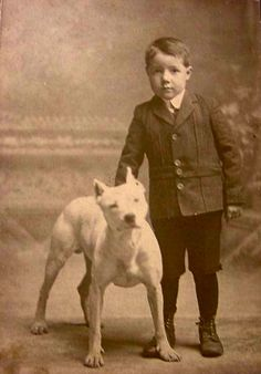 Uplifting So You Want A American Pit Bull Terrier Ideas. Fabulous So You Want A American Pit Bull Terrier Ideas. Pit Bulls, Pitbull Terrier, Bull Terriers, Dog Photos, Dog Pictures, Nanny Dog, Vintage Children, Pit Bull Love, Animals