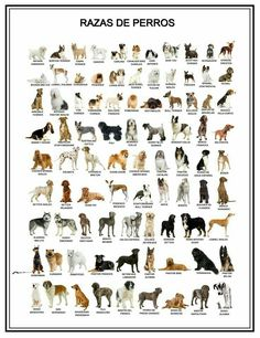 Doggie breeds with pics!