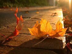 A season of falling leaves: Photo
