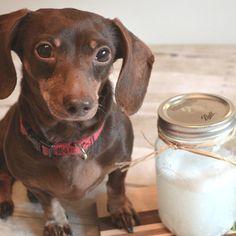 Homemade Dog Shampoo for Itchy Skin