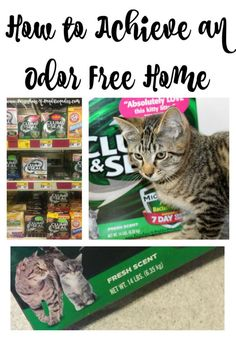 Animals are my passion. Cats, dogs, horses…you name it we' have them around our house or in our barn. Sure they're beautiful, and loving and become part of the family, but having a lot of animals has it's down sides too. Especially where cats are concerned. #CLUMPandSEAL #ad @PetSmart
