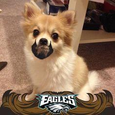#EaglesDraft Beard puppy! http://on.fb.me/10QZMII