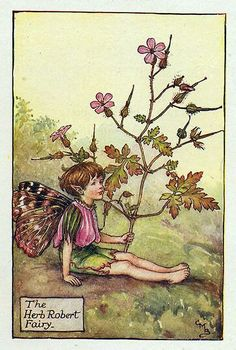 Herb Robert flower fairy by Cicely Mary Barker