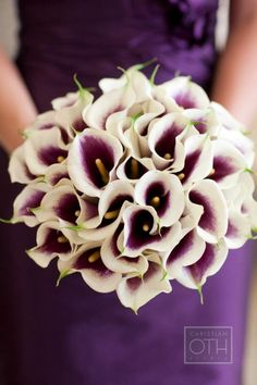 This is a stunning all-calla bridal bouquet for a wedding!  Sometimes I love it when brides choose to stick to just one flower for their bridal bouquet.