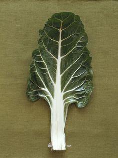 Grow a Good Mood Garden- 10 Antidepressant Foods & How To Grow Them