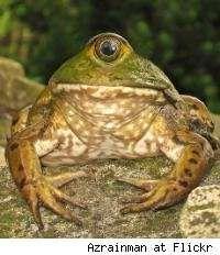 Bizarre Environmental Adaptations - Deformed Amphibians on the Rise (GALLERY)