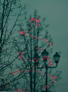 lights in trees
