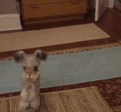 Wally le lapin aux oreilles en forme dailes dange  2Tout2Rien