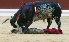 """TODO BAJO CONTROL DEL TORO. El diestro José Miguel Pérez """"Joselillo,"""" que cortó una oreja, ha sido volteado al entrar a matar a uno de los toros de su lote, durante la corrida de la Feria de la Virgen Blanca celebrada esta tarde en la plaza de toros de Vitoria, España. (EFE/Adrián Ruiz de Hierro)"""