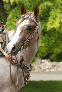 strawberry paint horses | ll take the horse and the tack..I love strawberry roans! awesome ...