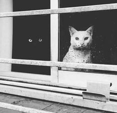Throughout history, black and white cats have always been intriguing to people. Some think black cats bring bad luck, some think white cats are the ones Cool Cats, I Love Cats, Crazy Cat Lady, Crazy Cats, Animals And Pets, Cute Animals, Sleepy Animals, Fluffy Animals, Gatos Cats