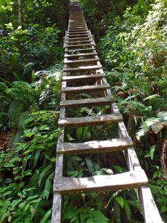 The West Coast Trail Guide 2018 West coast trail ladders West Coast Swing, South West Coast Path, West Coast Trail, West Coast Road Trip, Pacific Coast Highway, Rocky Mountain National, National Forest, Trail Guide, Utah Hikes