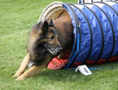 How to make your own dog agility course @ Pet Advisor