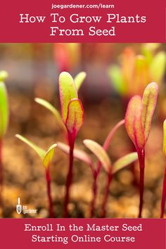 Are you anxious to get gardening? Then, it's time to master seed starting! Starting your own seedlings is such a great way to get your hands into the soil while you're waiting for the weather to cooperate - and it's a terrific way to save you money in the garden. | #masterseedstarting #startseeds #seedlings #seeds #seedstarting #gardeningcourses #onlinegardeningcourses #startseedsindoors Starting Plants From Seeds, Starting Seeds Indoors, Seed Starting, Gardening Courses, Gardening Tips, Organic Seeds, Good Morning America, Grow Your Own Food, Green Life