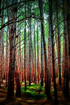 ✯ Waihou Forest  - Maui