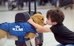 Το νέο μέλος της ομάδας Lost & Found της KLM  #nationaldogsday
