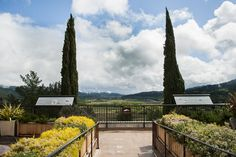 Terrace at @sterlingwines -- beautiful Napa Valley! via @PennySadler on Traveling with Sweeney