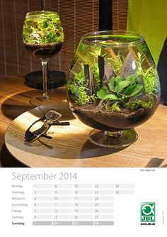Faszination Aquascaping: JBL Community Kalender Nano 2014