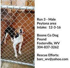 Fosterville, WV: M TWC in Run 3 @ Boone County Dog Pound