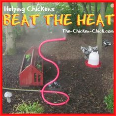 High heat is dangerous for chickens and measures must be taken by their caretakers to ensure their well-being, particularly when temperatures increase suddenly. Heat stroke, heat-induced stress and death can result when a chicken is overheated. Raising Backyard Chickens, Keeping Chickens, Backyard Farming, Pet Chickens, Urban Chickens, Rabbits, Chicken Coup, Chicken Chick, Chicken Lady