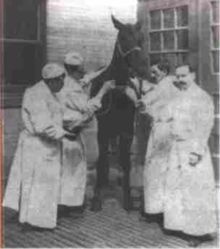 Jim was a former milk wagon horse who was used to produce serum containing antibodies against diphtheria toxin. Jim produced over 30 quarts of diphtheria antitoxin in his career, and no doubt saved many lives.