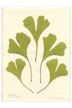Botanical Print on Japanese Rice Paper