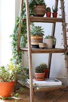 Ladders are perfect for displaying house plants and this ladder from MiaFleur looks fab styled by Lobster and Swan!