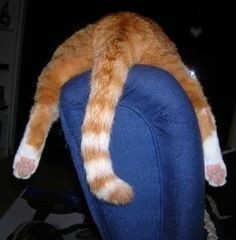 After a hard day's work pinning cat pictures, it feels good to relax in my favorite chair...