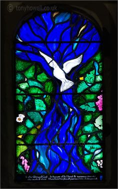 Beautiful photography of stained glass dove.