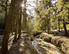 """טיול רגוע ליד גדות הנחל בנחל השופט (צילום: אייל ברטוב, קק""""ל)"""
