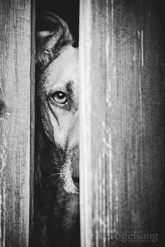 """Door Keeper - Elke Vogelsang is a German photographer whose muse became her dogs when she rescued her first, Noddles. """"In my family, all dogs were rescue dogs,"""" Vogelsang explains. """"So to me, it was always clear that I would get my dog from …"""