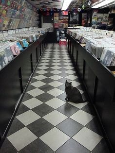record stores... - one thing that makes me sad for people who are a lot younger is that they largely missed out on the record store. I used to hit all of them and comb for jems, and downloading from itunes isn't the same experience. The last great record store I know of that's still open does have a cat, though.
