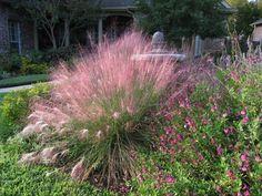 Xeriscape-Design-Austin-Muhlenbergia-capillaris-Gulf-Muhly (sun/ part shade)