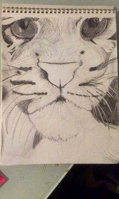 Pencil drawing of a tiger. 2012