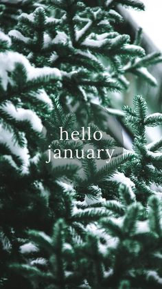 Hello January Images, Pictures, Quotes, and Pics January Wallpaper, Happy Wallpaper, New Year Wallpaper, Free Desktop Wallpaper, Calendar Wallpaper, Pretty Wallpapers, Wallpaper Lockscreen, Christmas Phone Wallpaper, Holiday Wallpaper