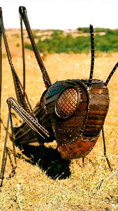 Grasshopper Alan Williams