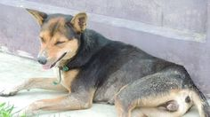 Petition · Please take immediate action to help this poor animal. · Change.org