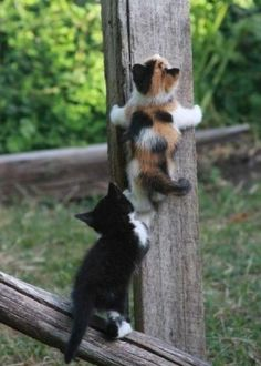 Climb Up Little Kitty!