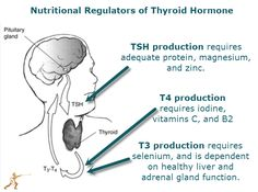 Hypothyroidism: Vitamiins & Minerals that drive chemistry for different thyroid hormones. Tests, Foods, Thyroid Problems Linked to Halide Exposure