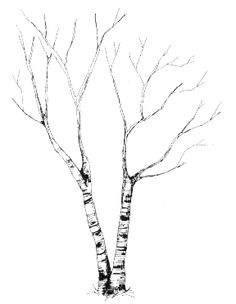 patterns for wood burning coloring pages or arts and crafts l birch - Birch Tree Branches Coloring Pages