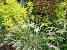 Calamagrotis foliosa in front of variegated euphorbia martinii ascot rainbow Ascot, Rainbow, Garden, Plants, Rain Bow, Rainbows, Garten, Lawn And Garden, Gardens