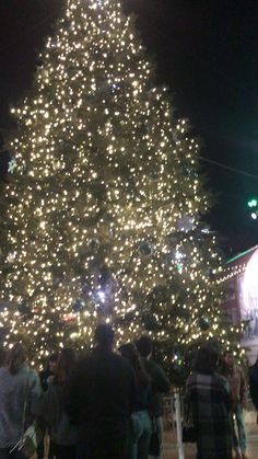 Fort Worth Downtown, Fort Worth Texas, You Can Do, Christmas Tree, Holiday Decor, Holiday Tree, Xmas Trees, Christmas Trees, Xmas Tree