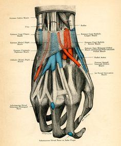 Medical Diagram of Human Hand