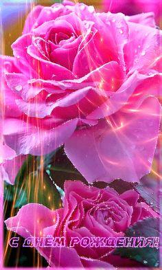Розовая роза на день Рождения - С Днем Рождения