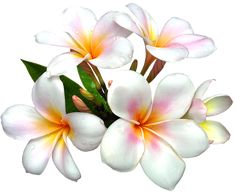 White Large PNG Flower Clipart