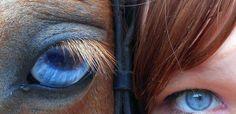 Stadnina koni Rancho Ulina Łeba: pensjonat i hotel dla koni. Konne obozy jeździeckie nad morzem k. Łeby.