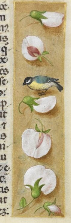 Lonely bird between the flowers. One of the marvelous borders in a Flemish manuscript: the Huth Book of Hours. London BL Add38126