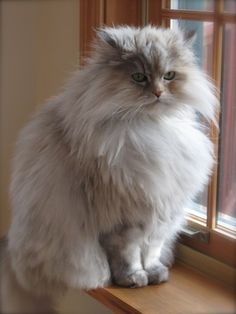 """I have just been given a very engaging Persian kitten... and his opinion is that I have just been given to him."" -- Evelyn Underhill"